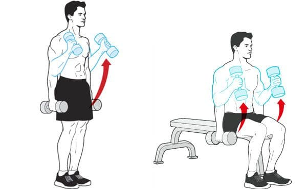 Dumbbell-hammer-curl-while-standing-and-sitting