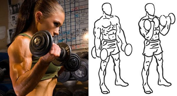 Supinated-wrist-curl-with-dumbbell-exercise-technique