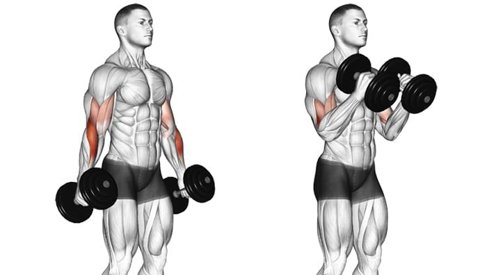 dumbbell-hammer-curl-working-muscles