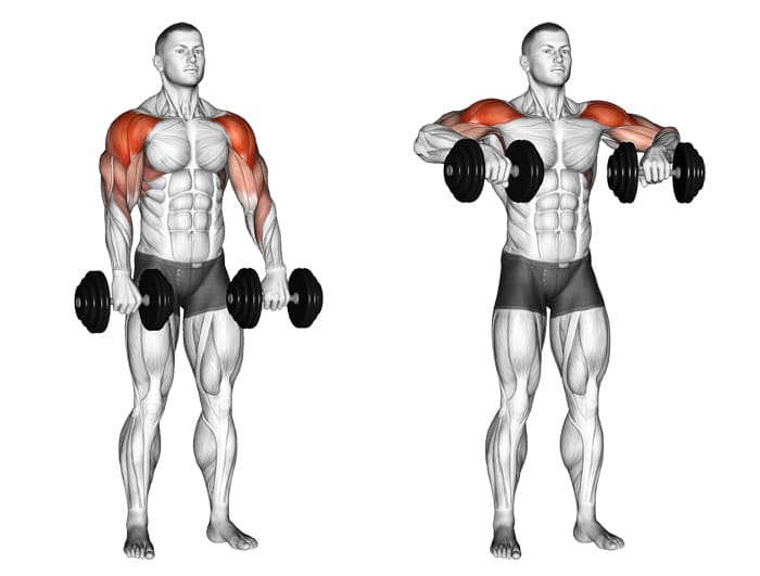 dumbbell-upright-rows-working-muscles